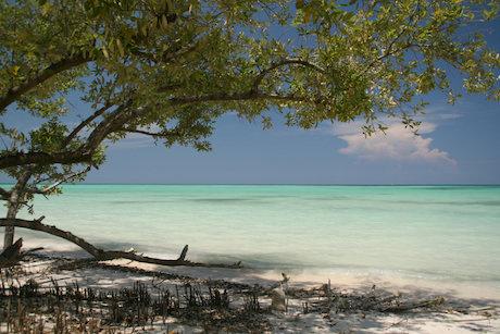 Strand i Västindien